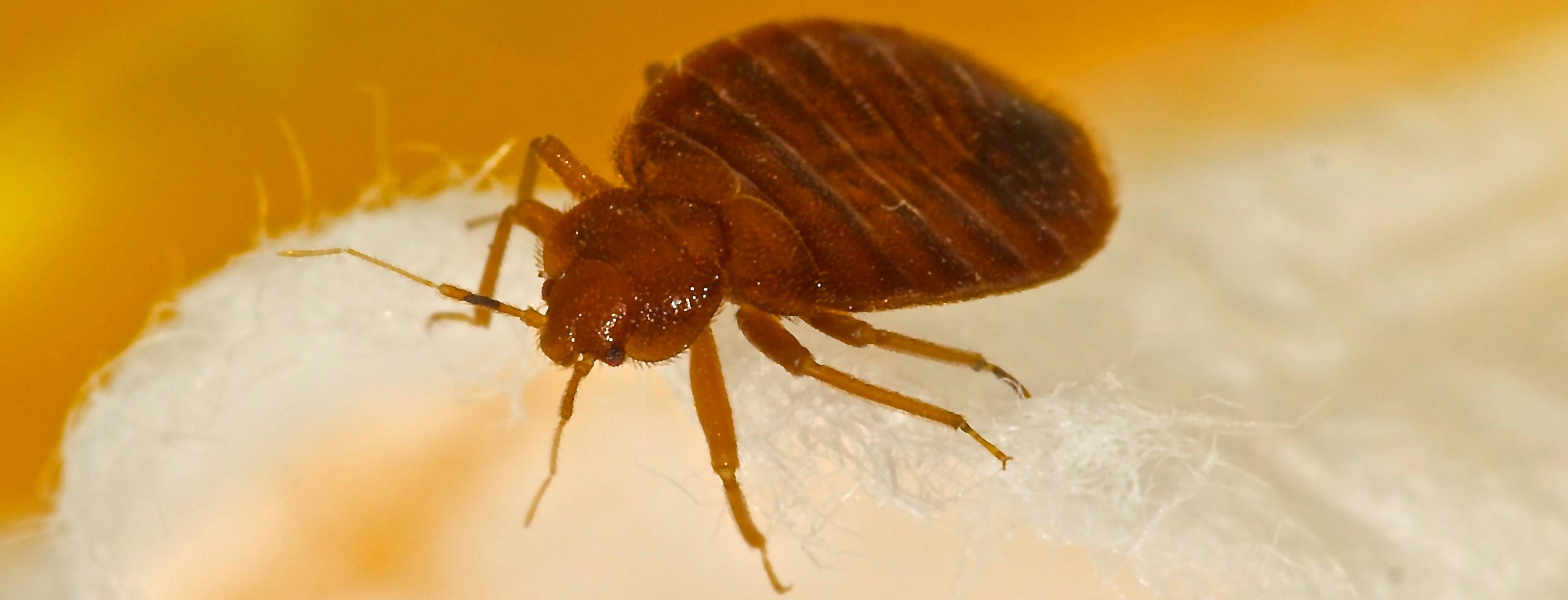 BEYOND THE BED: OTHER PLACES BED BUGS MAY BE HIDING